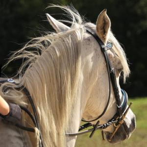 horse-3030892_960_720